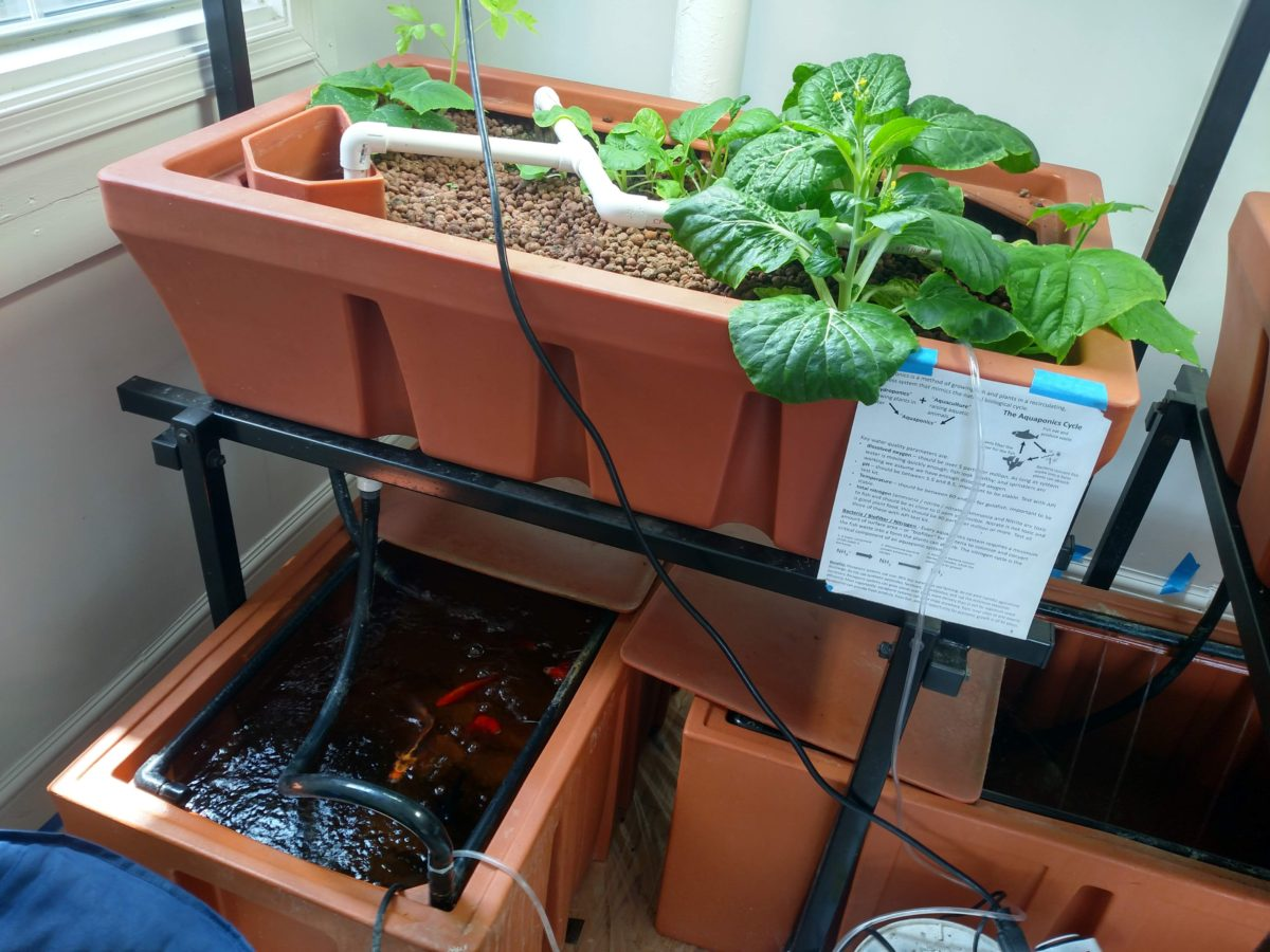 Small-Scale Aquaponics Training Course & Certificate